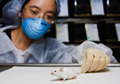 脳内の老廃物蓄積を抑制するポリフェノール、新薬開発へ