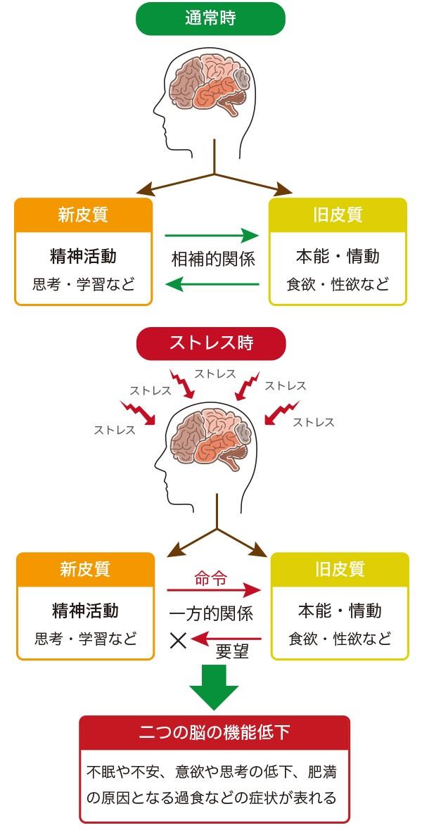 大脳新皮質と大脳旧皮質との関係性
