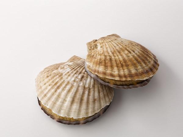 ホタテ貝のイメージ