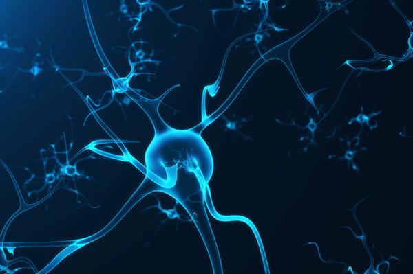 岡山大、体内時計が血液脳関門の維持に重要であることを発表