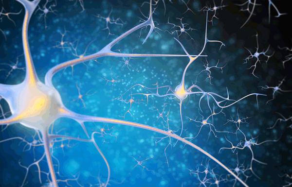 九州大、神経幹細胞が変化するメカニズムを明らかに