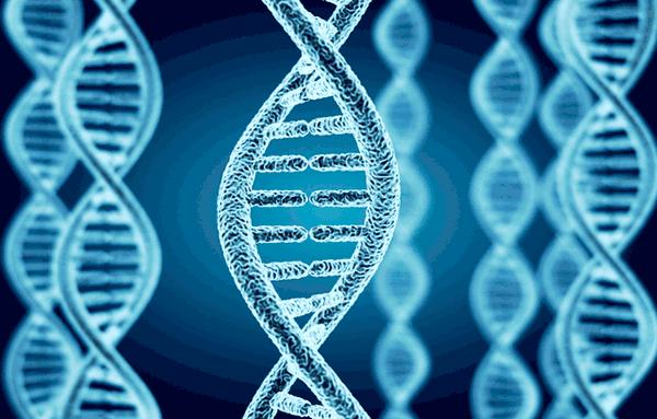 アイキャッチ:国際電通技研ら、ヒト疾患モデルにおける遺伝子発現地図を完成