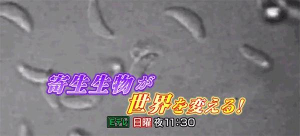 アイキャッチ:6/24・23:30〜NHKEテレ「寄生生物が世界を変える!」