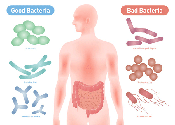 アイキャッチ:国立長寿医療研究センターが発表、 腸内細菌と認知症の強い関連
