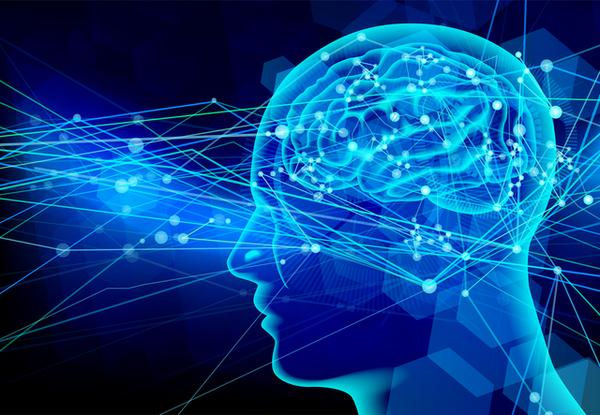 アイキャッチ:神経細胞由来のエストロゲンが記憶に関わることを調べた研究
