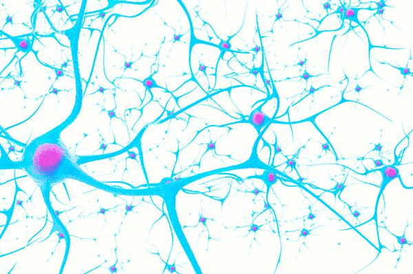 アイキャッチ:群馬大、傷ついた脳の修復作用にブレーキをかける分子を発見