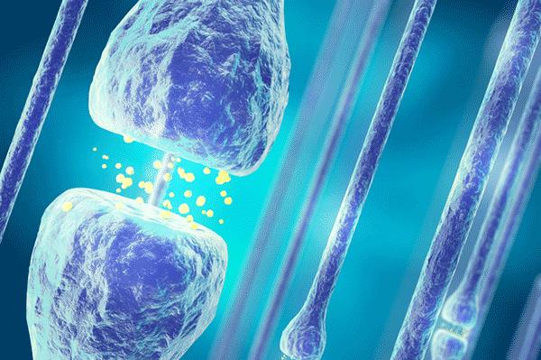 アイキャッチ:生理学研究所、シナプスの情報伝達効率を光で強化することに成功